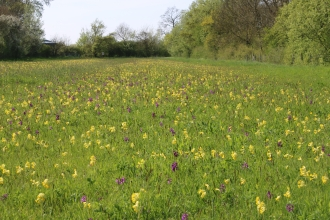 Flowers galore on Chettisham Meadow