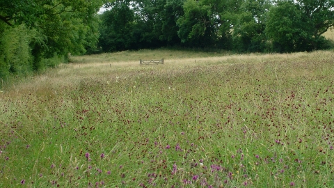 Boddington Meadow credit. Jane Pearman